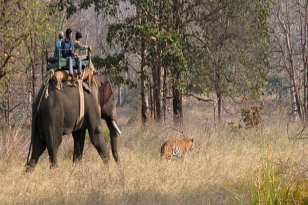 Park Safari -Kanha National Park