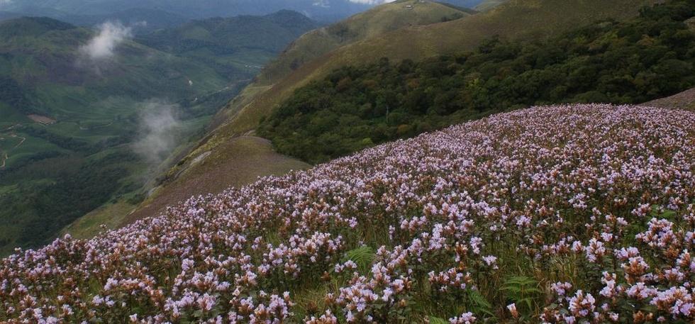 Blossom National Park, Munnar